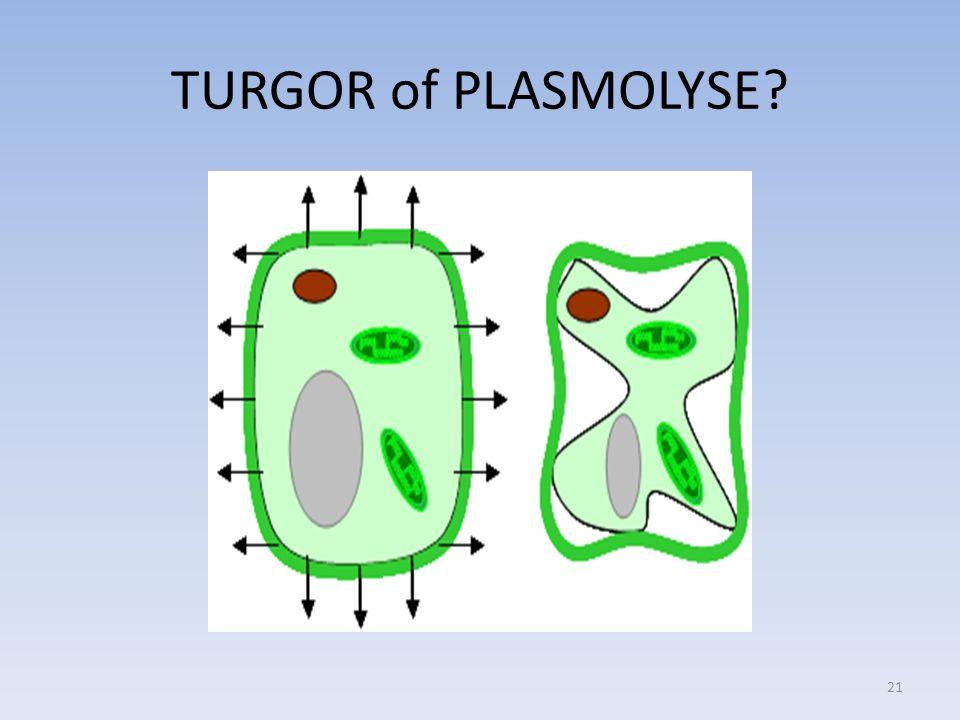TURGOR of PLASMOLYSE? 21
