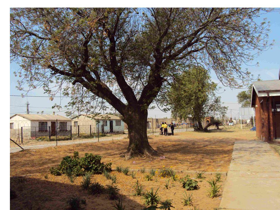 Impucuko Public School is een townshipschool.Er zijn 774 kinderen.