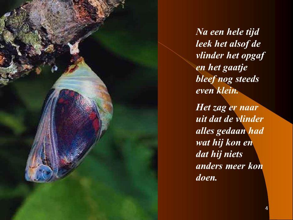 5 Toen besloot de mens om de vlinder te helpen: hij nam een zakmes en opende de cocon.