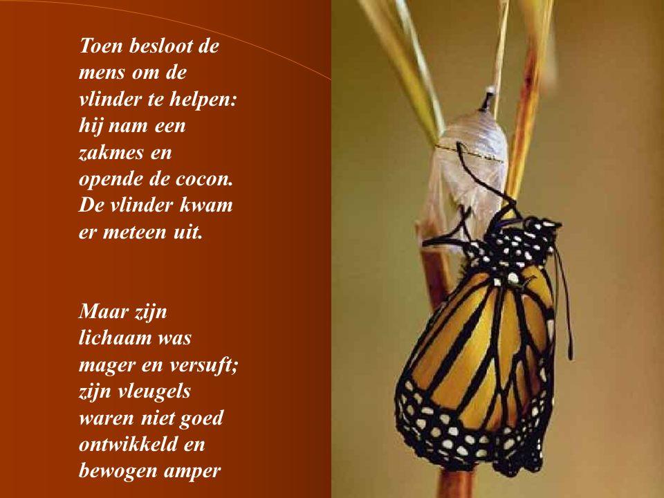 6 De mens bleef hem gadeslaan in de veronderstelling dat de vleugels van de vlinders zich ogenblikkelijk zouden openen en in staat zouden zijn het lichaam van de vlinder te dragen opdat hij zou kunnen wegvliegen.