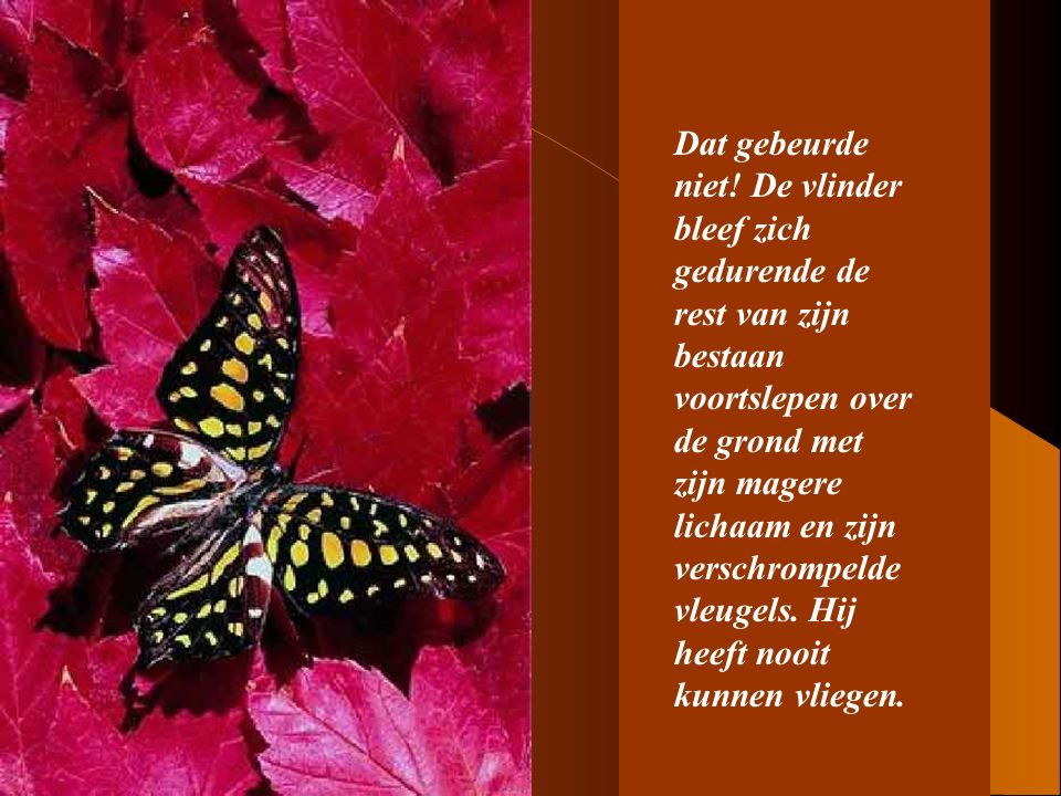 8 Wat de mens, met zijn vriendelijke en behulpzame gebaar, niet begreep is dat de doorgang door het smalle gaatje van de cocon een noodzakelijke inspanning was voor de vlinder om de vloeistof vanuit zijn lichaam in zijn vleugels te doen stromen om te kunnen vliegen.