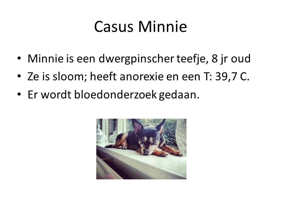 Casus Minnie Minnie is een dwergpinscher teefje, 8 jr oud Ze is sloom; heeft anorexie en een T: 39,7 C. Er wordt bloedonderzoek gedaan.