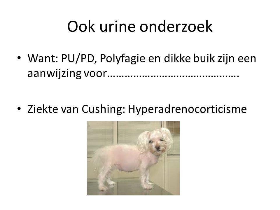Ook urine onderzoek Want: PU/PD, Polyfagie en dikke buik zijn een aanwijzing voor………………………………………. Ziekte van Cushing: Hyperadrenocorticisme