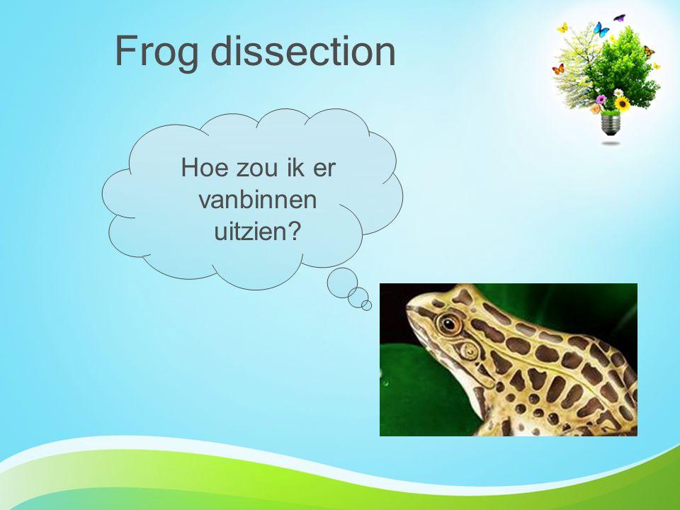 Frog dissection Hoe zou ik er vanbinnen uitzien?