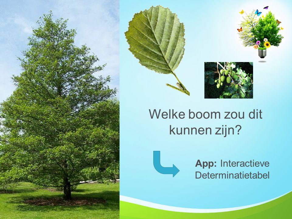 Welke boom zou dit kunnen zijn? App: Interactieve Determinatietabel