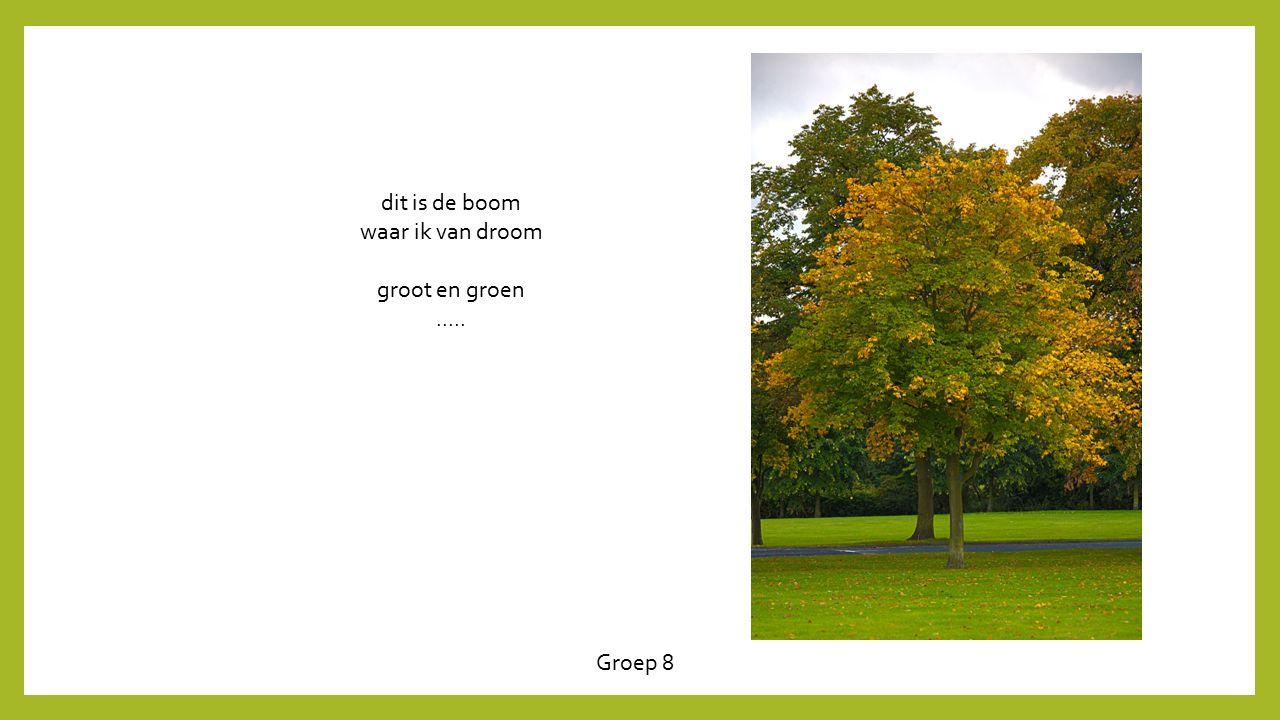 Groep 8 dit is de boom waar ik van droom groot en groen.....