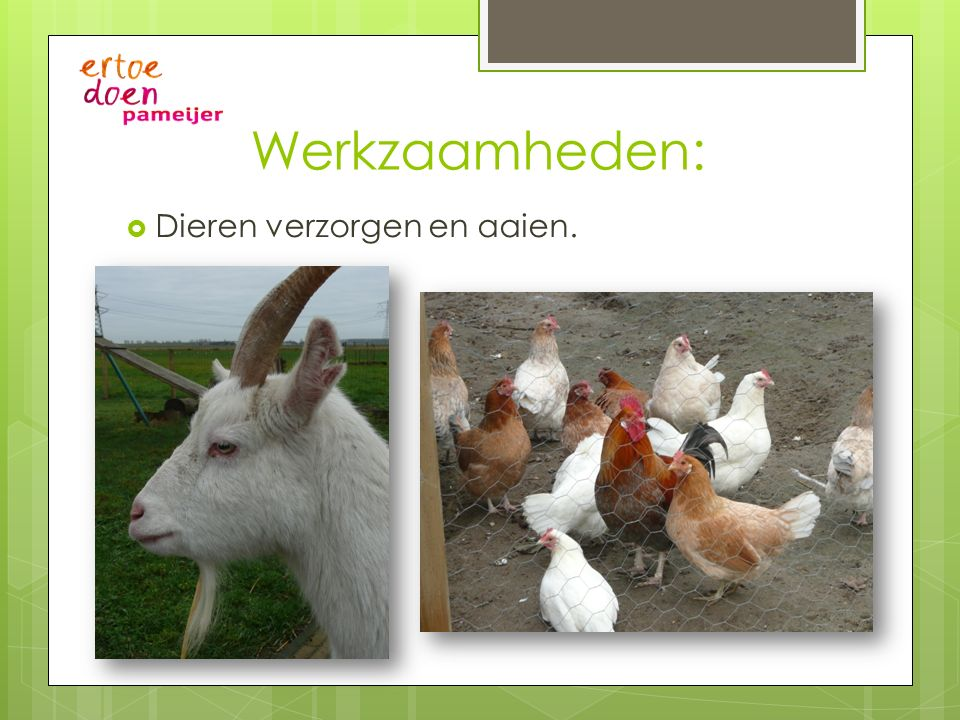 Werkzaamheden:  Dieren verzorgen en aaien.