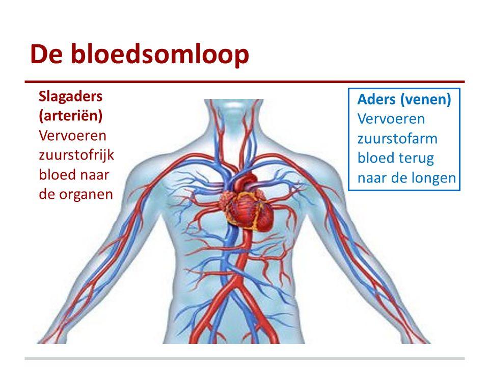 De bloedsomloop Slagaders (arteriën) Vervoeren zuurstofrijk bloed naar de organen Aders (venen) Vervoeren zuurstofarm bloed terug naar de longen