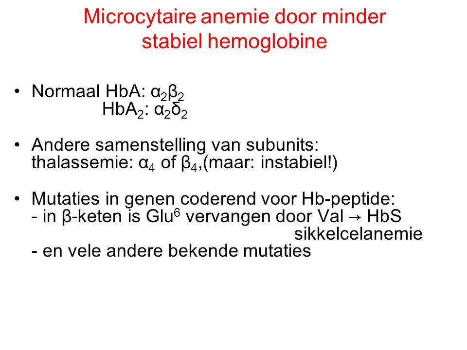 Microcytaire anemie door minder stabiel hemoglobine Normaal HbA: α 2 β 2 HbA 2 : α 2 δ 2 Andere samenstelling van subunits: thalassemie: α 4 of β 4,(m