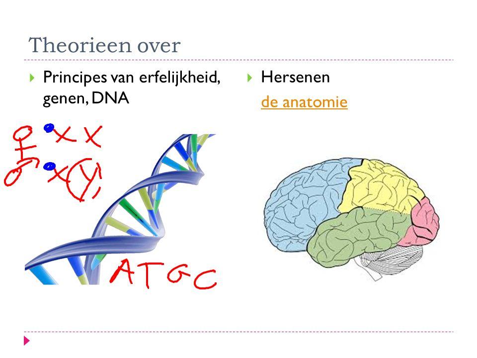 Theorieen over  Principes van erfelijkheid, genen, DNA  Hersenen de anatomie