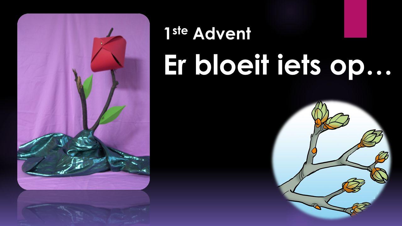 1 ste Advent Er bloeit iets op…