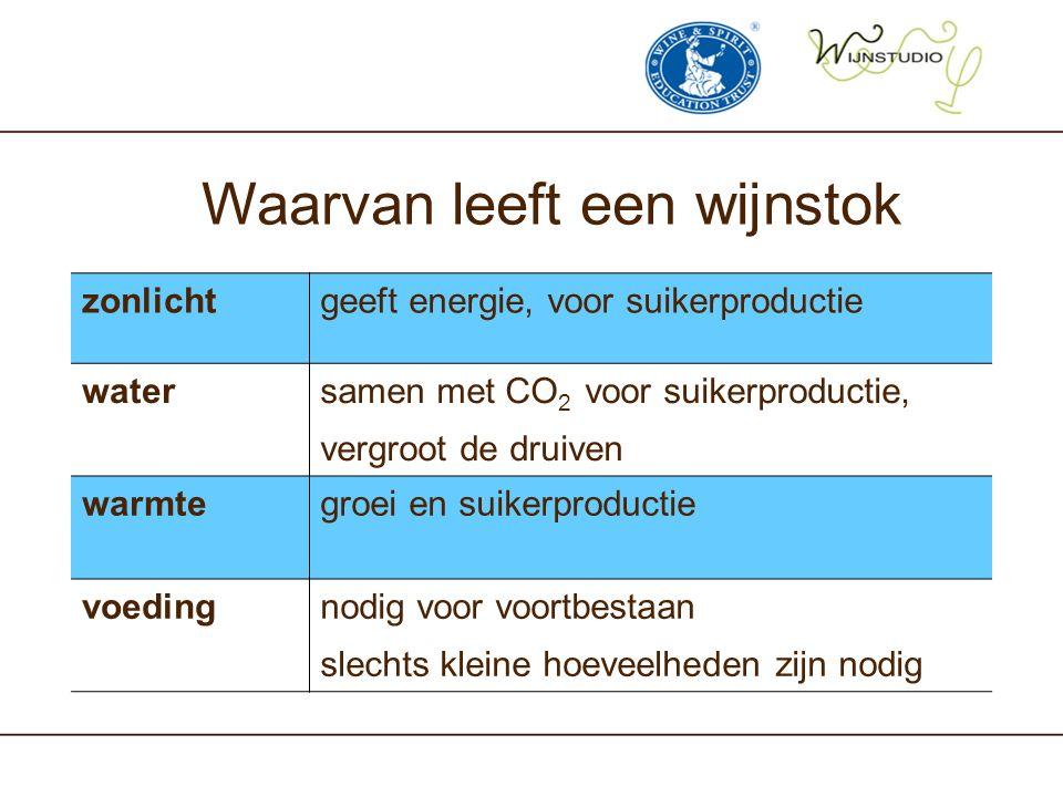 Waarvan leeft een wijnstok zonlichtgeeft energie, voor suikerproductie watersamen met CO 2 voor suikerproductie, vergroot de druiven warmtegroei en su