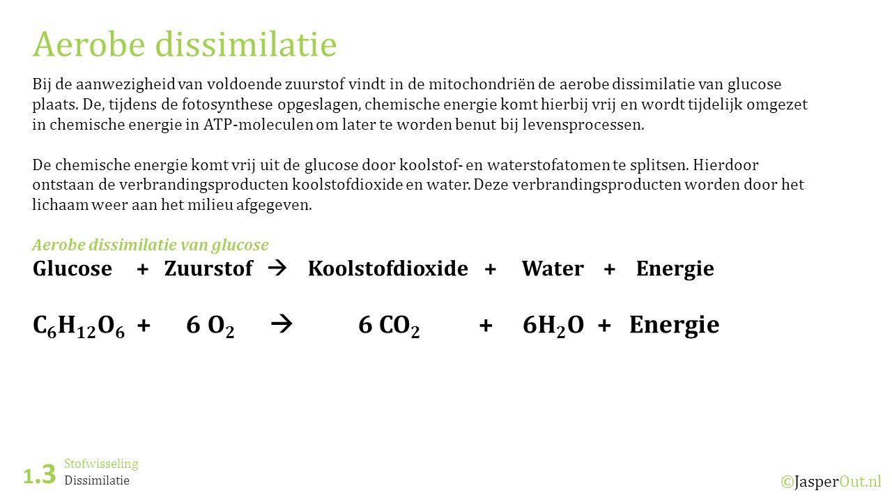 Stofwisseling 1.3 ©JasperOut.nl Dissimilatie Aerobe dissimilatie Bij de aanwezigheid van voldoende zuurstof vindt in de mitochondriën de aerobe dissimilatie van glucose plaats.