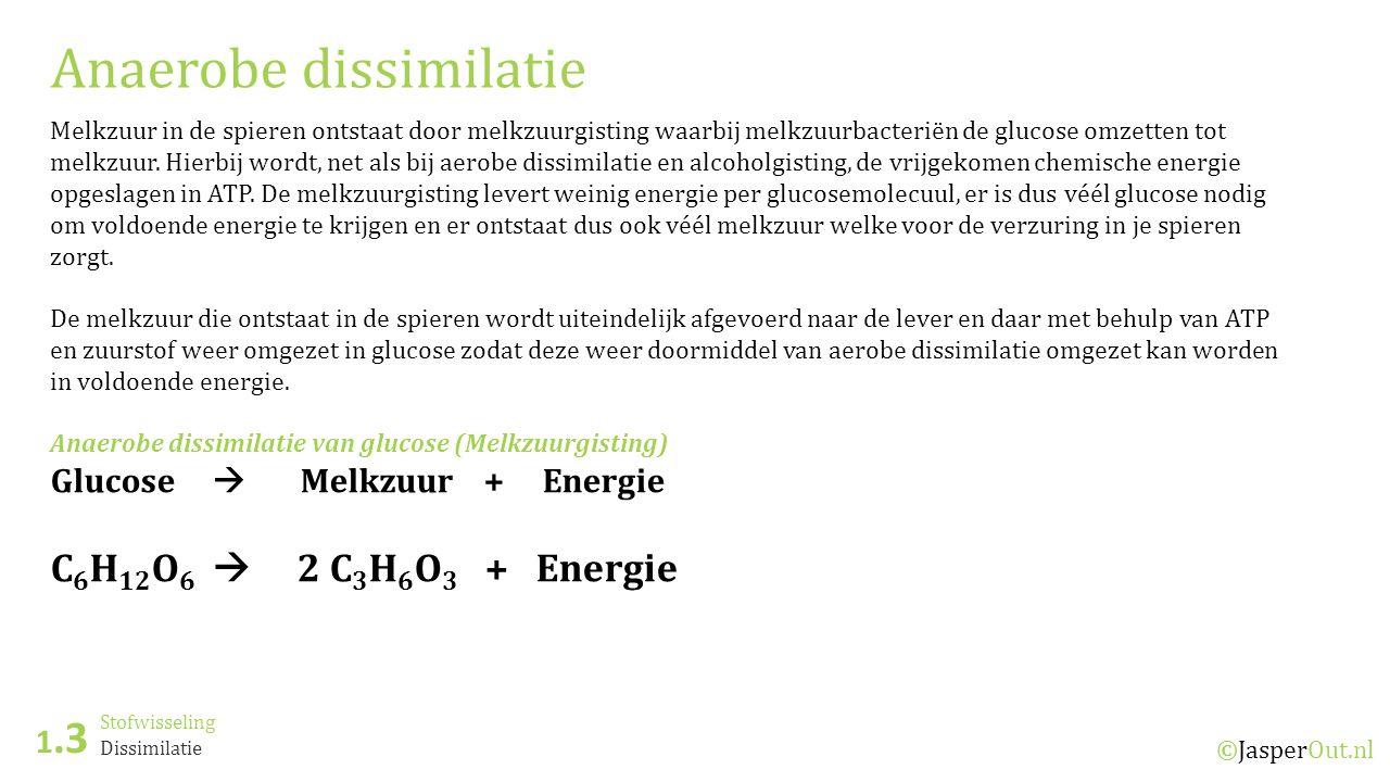Stofwisseling 1.3 ©JasperOut.nl Dissimilatie Anaerobe dissimilatie Melkzuur in de spieren ontstaat door melkzuurgisting waarbij melkzuurbacteriën de glucose omzetten tot melkzuur.