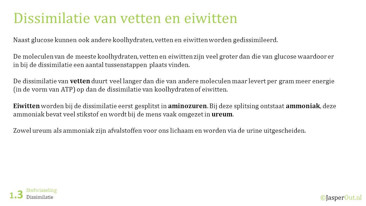 Stofwisseling 1.3 ©JasperOut.nl Dissimilatie Dissimilatie van vetten en eiwitten Naast glucose kunnen ook andere koolhydraten, vetten en eiwitten word
