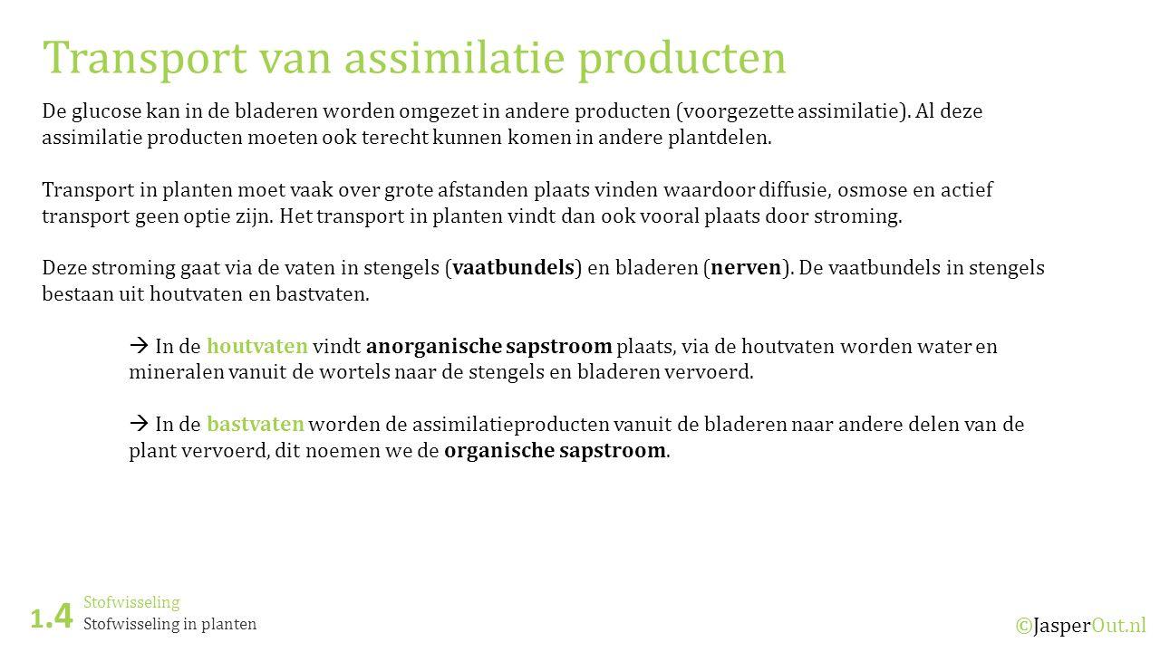 Stofwisseling 1.4 ©JasperOut.nl Stofwisseling in planten Transport van assimilatie producten De glucose kan in de bladeren worden omgezet in andere producten (voorgezette assimilatie).