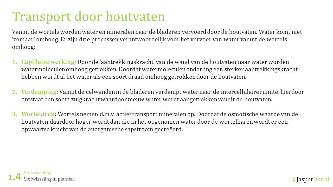 Stofwisseling 1.4 ©JasperOut.nl Stofwisseling in planten Transport door houtvaten Vanuit de wortels worden water en mineralen naar de bladeren vervoer