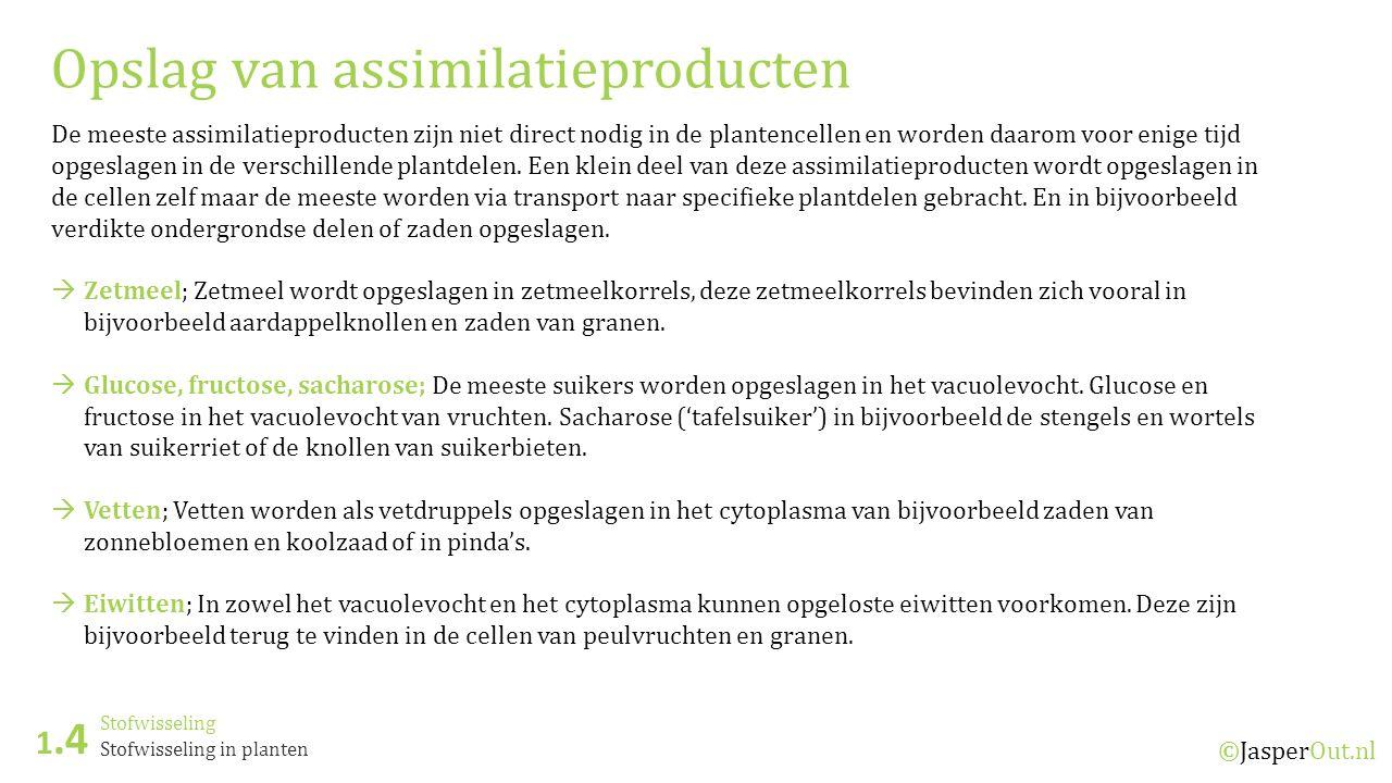 Stofwisseling 1.4 ©JasperOut.nl Stofwisseling in planten Opslag van assimilatieproducten De meeste assimilatieproducten zijn niet direct nodig in de plantencellen en worden daarom voor enige tijd opgeslagen in de verschillende plantdelen.