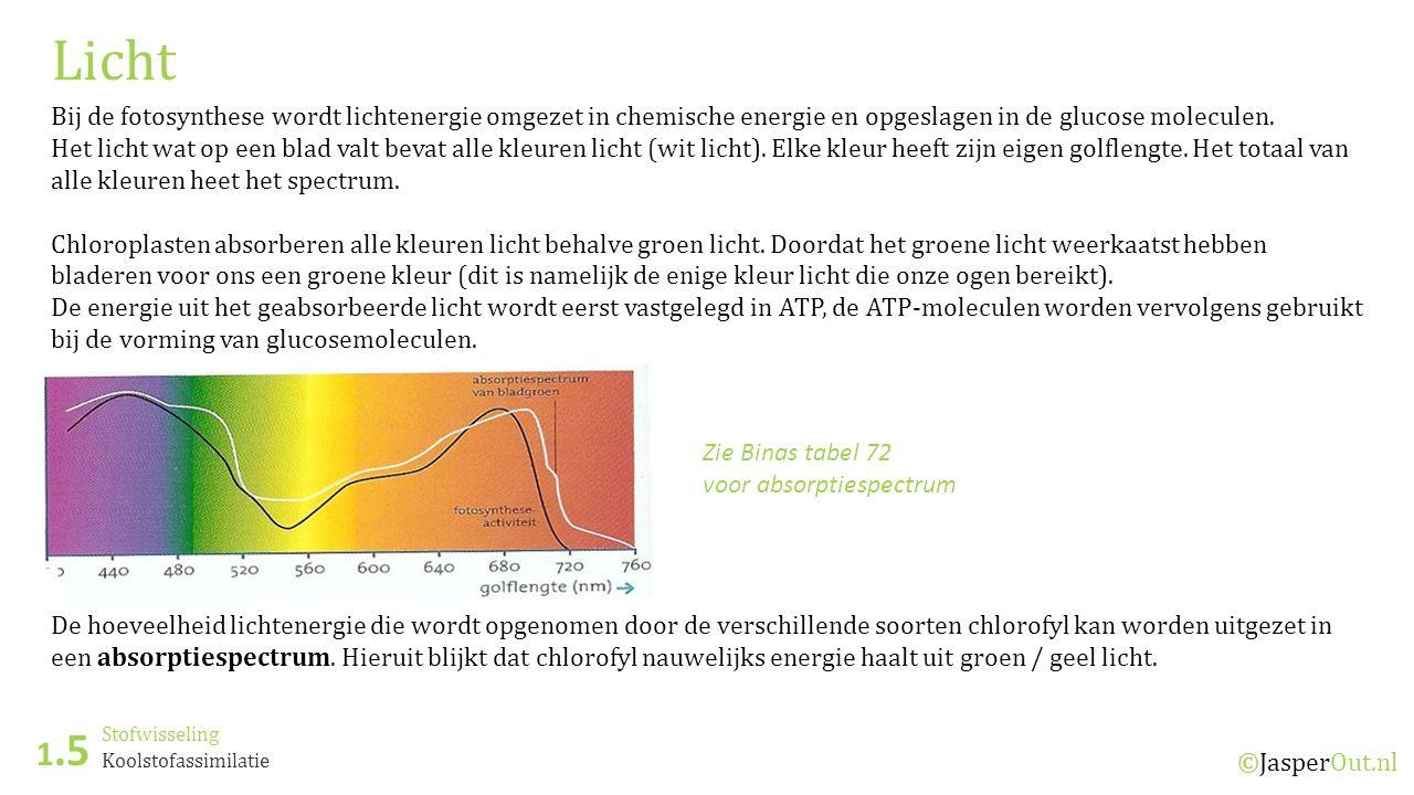 Stofwisseling 1.5 ©JasperOut.nl Koolstofassimilatie Licht Bij de fotosynthese wordt lichtenergie omgezet in chemische energie en opgeslagen in de glucose moleculen.