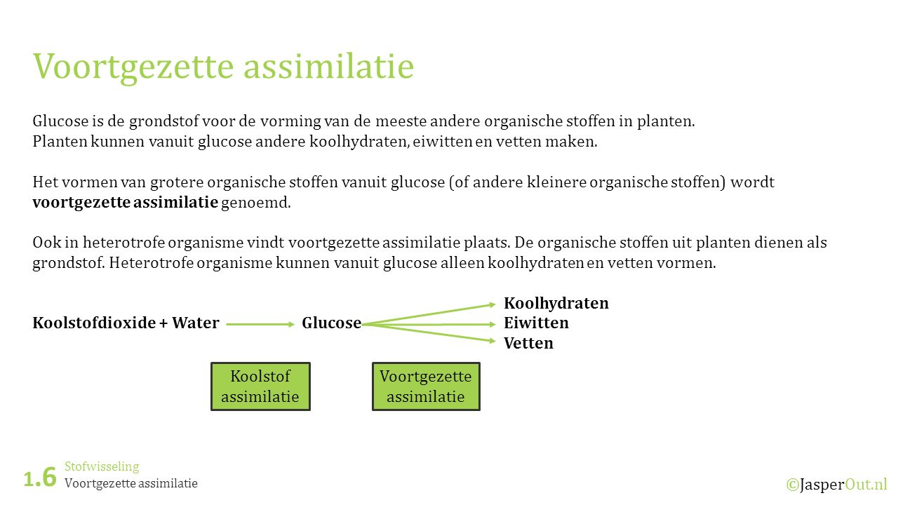 Stofwisseling 1.6 ©JasperOut.nl Voortgezette assimilatie Glucose is de grondstof voor de vorming van de meeste andere organische stoffen in planten.