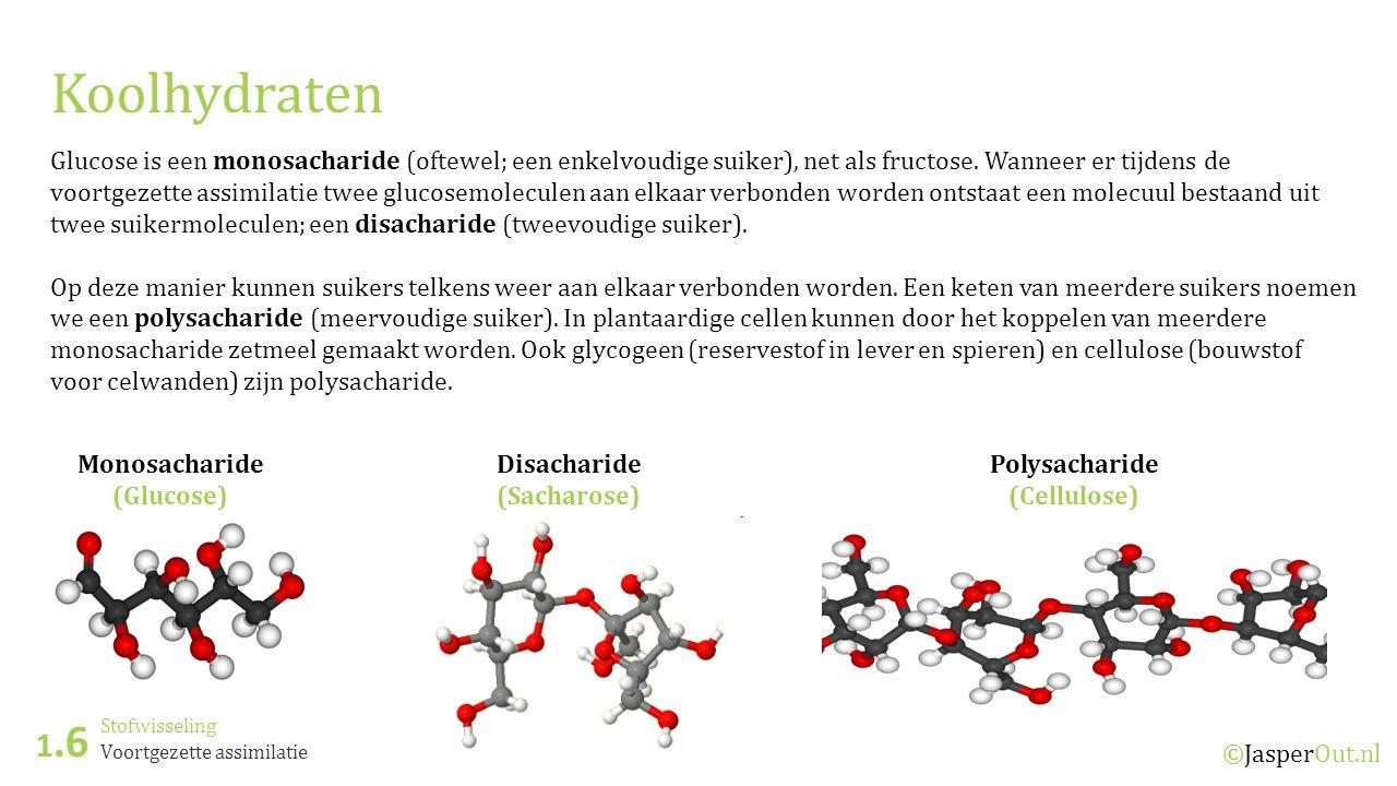 Stofwisseling 1.6 ©JasperOut.nl Voortgezette assimilatie Koolhydraten Glucose is een monosacharide (oftewel; een enkelvoudige suiker), net als fructos