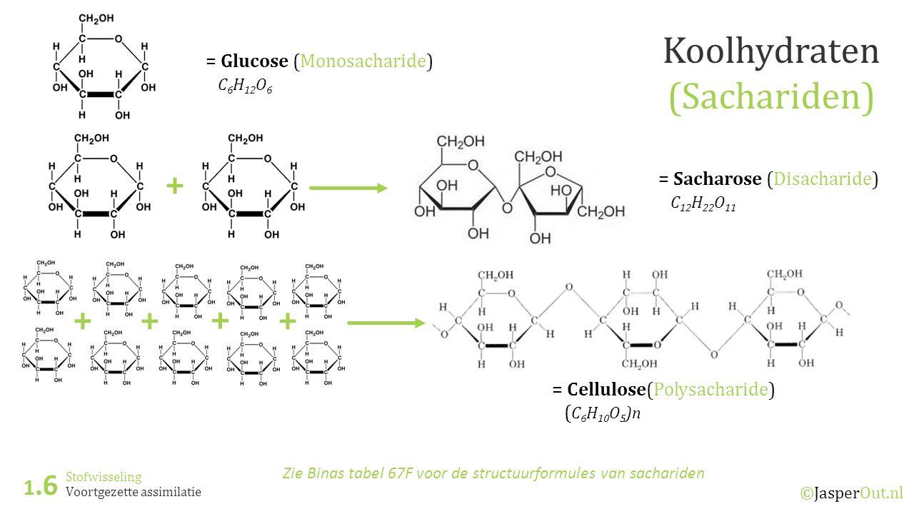 Stofwisseling 1.6 ©JasperOut.nl Voortgezette assimilatie Koolhydraten (Sachariden) Zie Binas tabel 67F voor de structuurformules van sachariden = Glucose (Monosacharide) C 6 H 12 O 6 + = Sacharose (Disacharide) C 12 H 22 O 11 + + + + = Cellulose(Polysacharide) ( C 6 H 10 O 5 )n