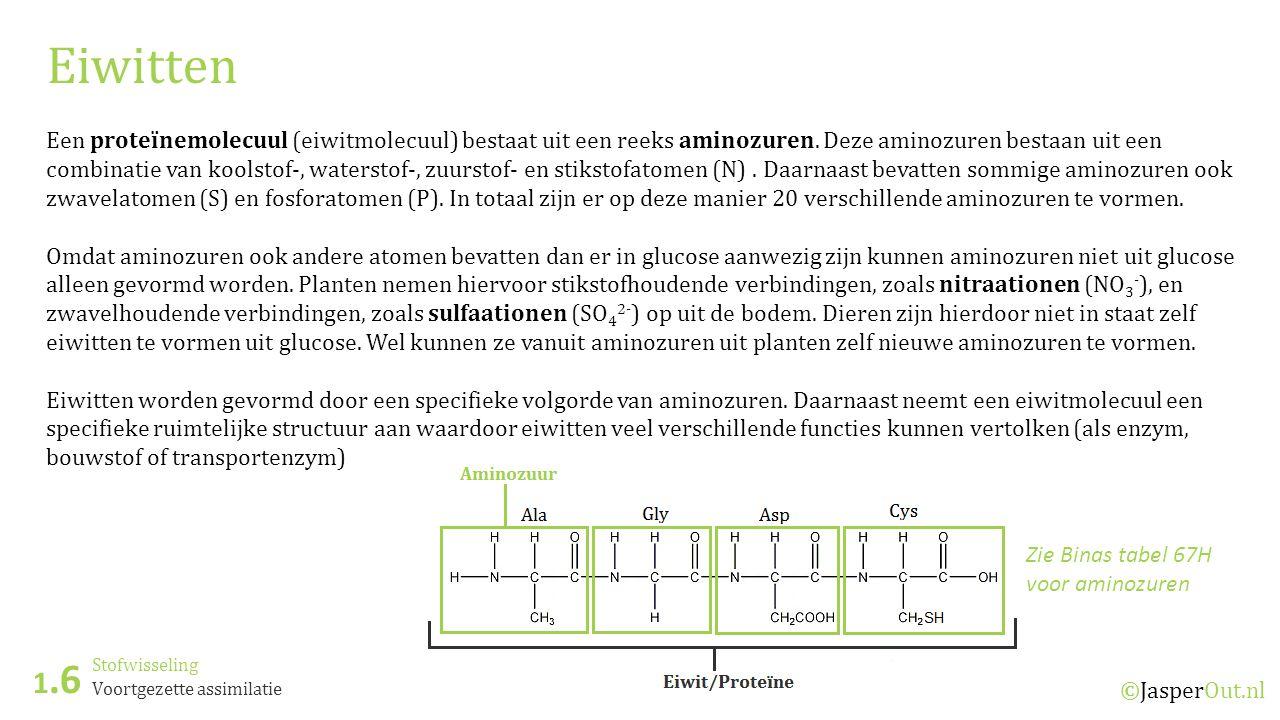 Stofwisseling 1.6 ©JasperOut.nl Voortgezette assimilatie Eiwitten Een proteïnemolecuul (eiwitmolecuul) bestaat uit een reeks aminozuren. Deze aminozur