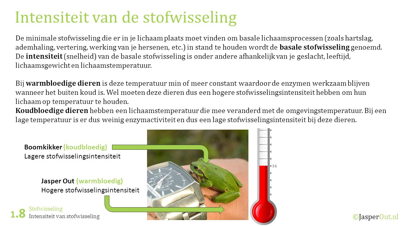 Stofwisseling 1.8 ©JasperOut.nl Intensiteit van stofwisseling Intensiteit van de stofwisseling De minimale stofwisseling die er in je lichaam plaats m