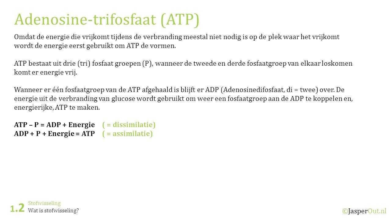Stofwisseling 1.2 ©JasperOut.nl Wat is stofwisseling? Adenosine-trifosfaat (ATP) Omdat de energie die vrijkomt tijdens de verbranding meestal niet nod
