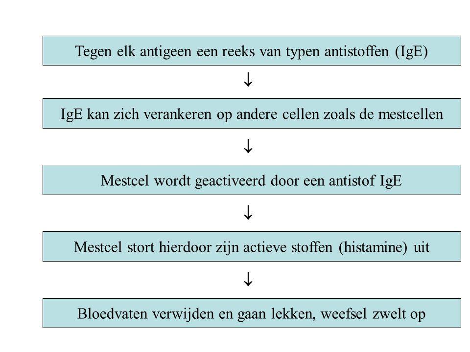 Tegen elk antigeen een reeks van typen antistoffen (IgE) IgE kan zich verankeren op andere cellen zoals de mestcellen Mestcel wordt geactiveerd door een antistof IgE Mestcel stort hierdoor zijn actieve stoffen (histamine) uit     Bloedvaten verwijden en gaan lekken, weefsel zwelt op