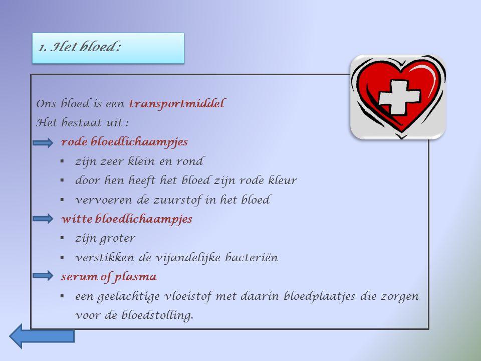 BESLUIT : Ons hart is een holle spier, ongeveer zo groot als een vuist.