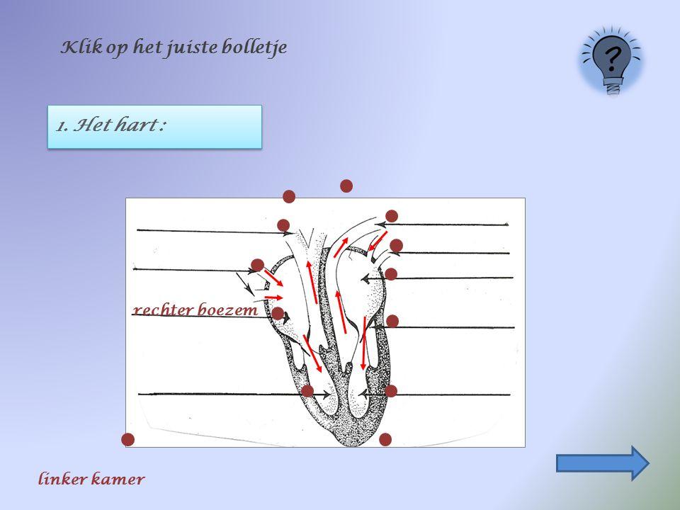 1. Het hart : Klik op het juiste bolletje rechter boezem