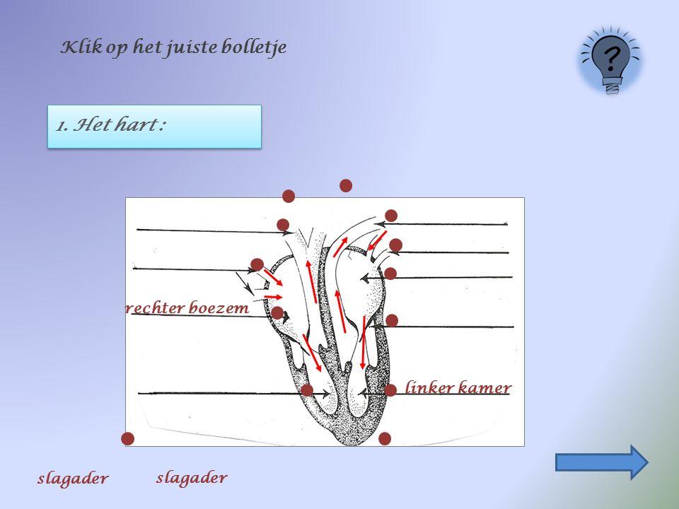 1. Het hart : Klik op het juiste bolletje linker kamer rechter boezem