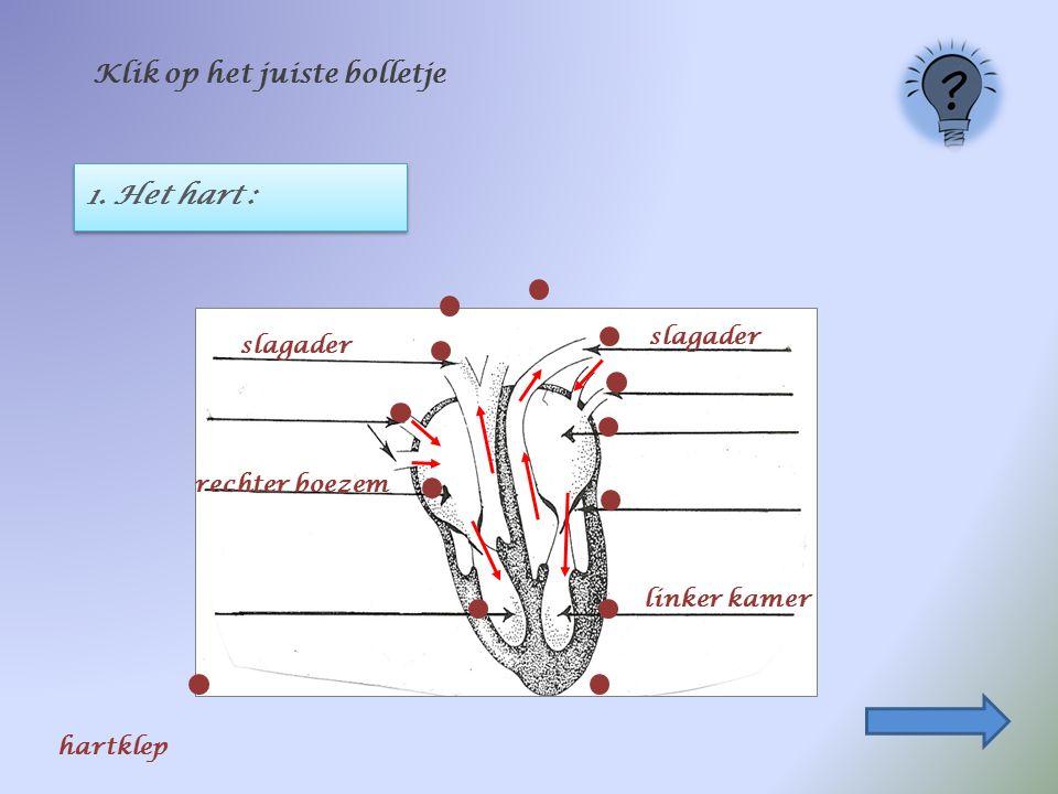 1. Het hart : Klik op het juiste bolletje slagader linker kamer rechter boezem