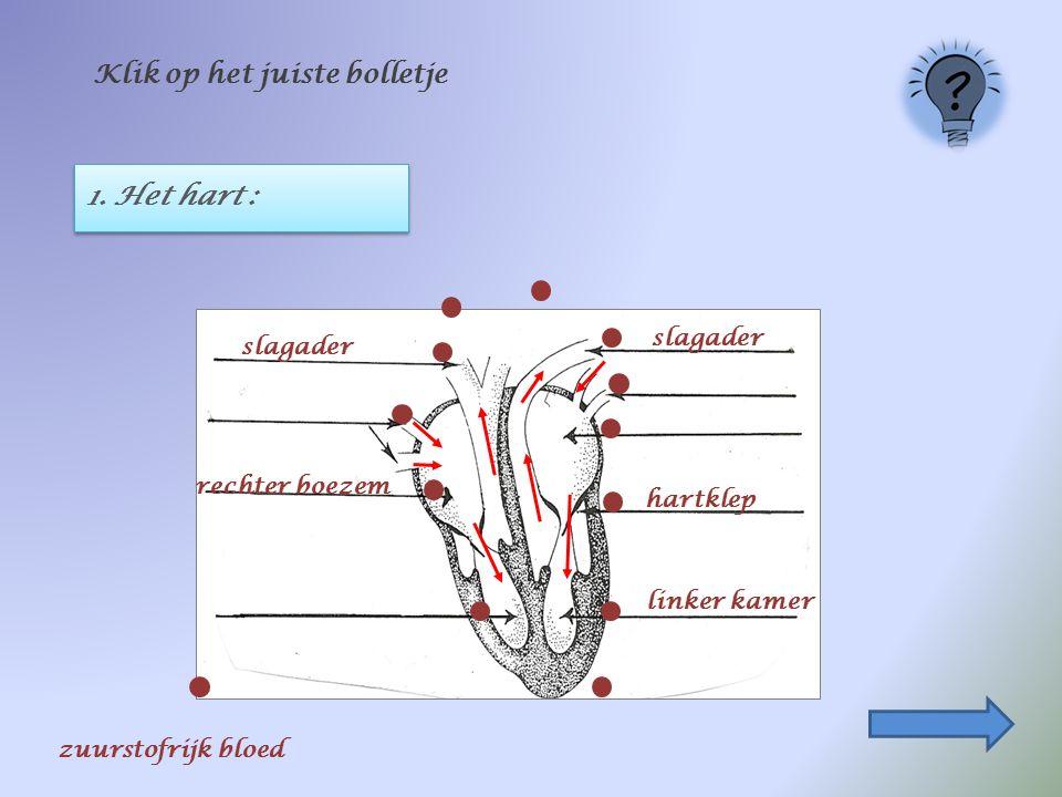 1. Het hart : Klik op het juiste bolletje hartklep rechter boezem linker kamer slagader