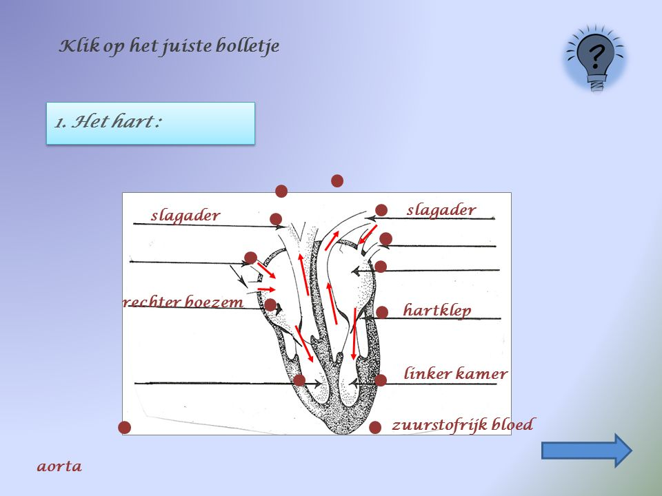 1. Het hart : Klik op het juiste bolletje zuurstofrijk bloed rechter boezem linker kamer slagader hartklep