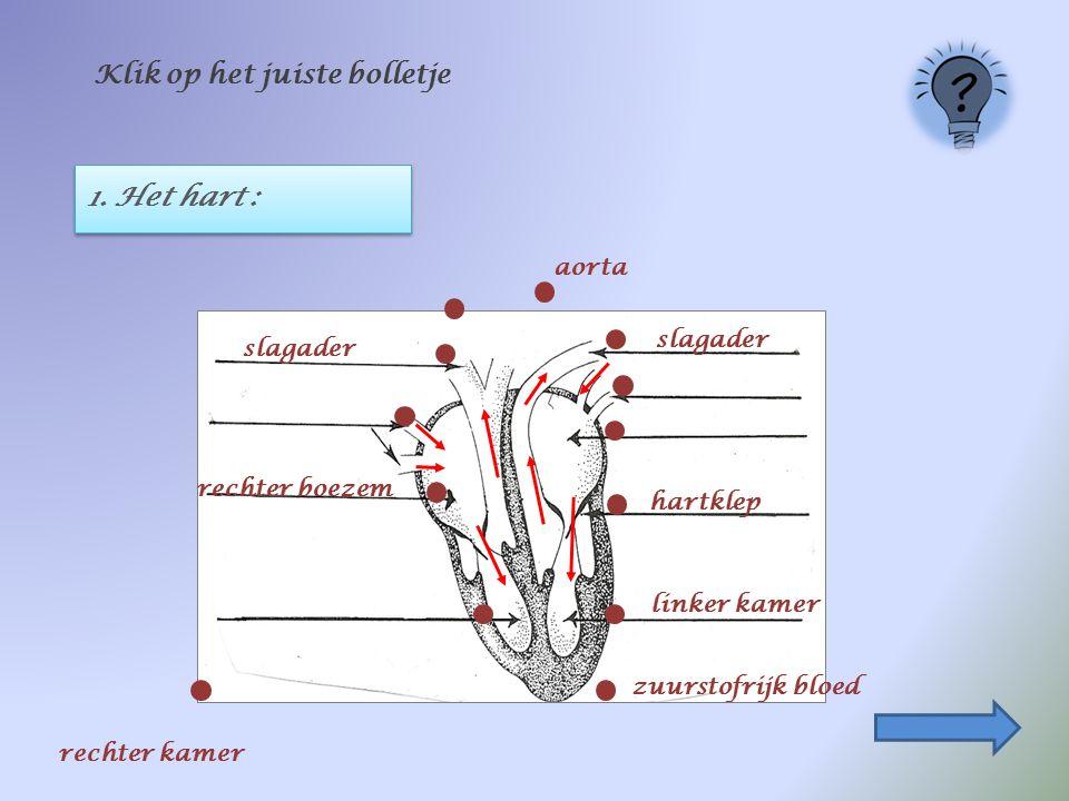 1. Het hart : Klik op het juiste bolletje aorta rechter boezem linker kamer slagader hartklep zuurstofrijk bloed