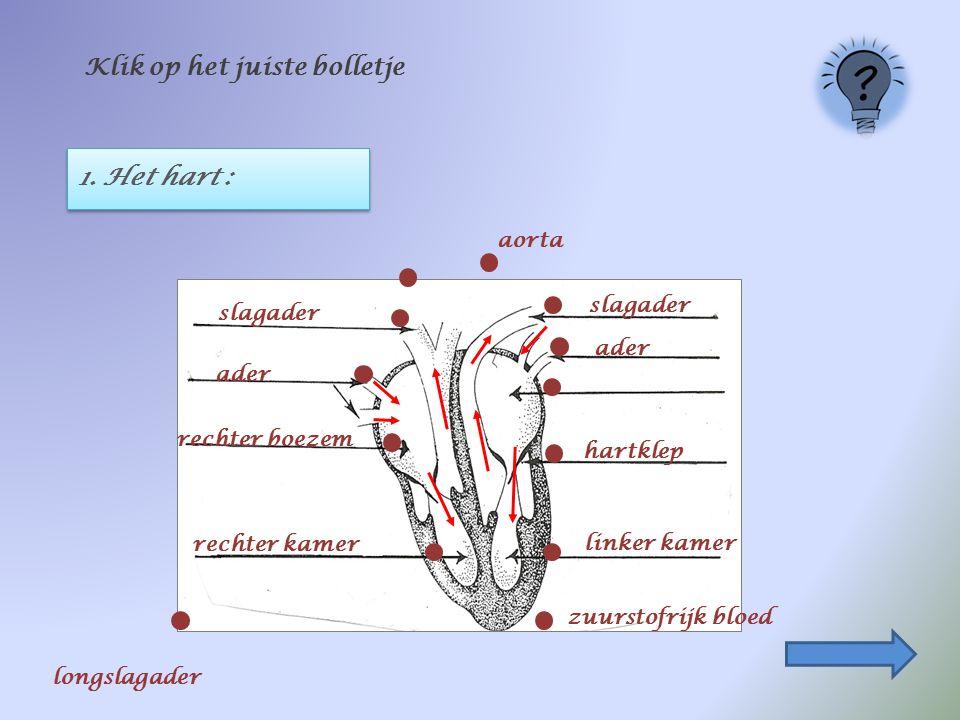 1. Het hart : Klik op het juiste bolletje ader rechter boezem linker kamer slagader hartklep zuurstofrijk bloed aorta rechter kamer