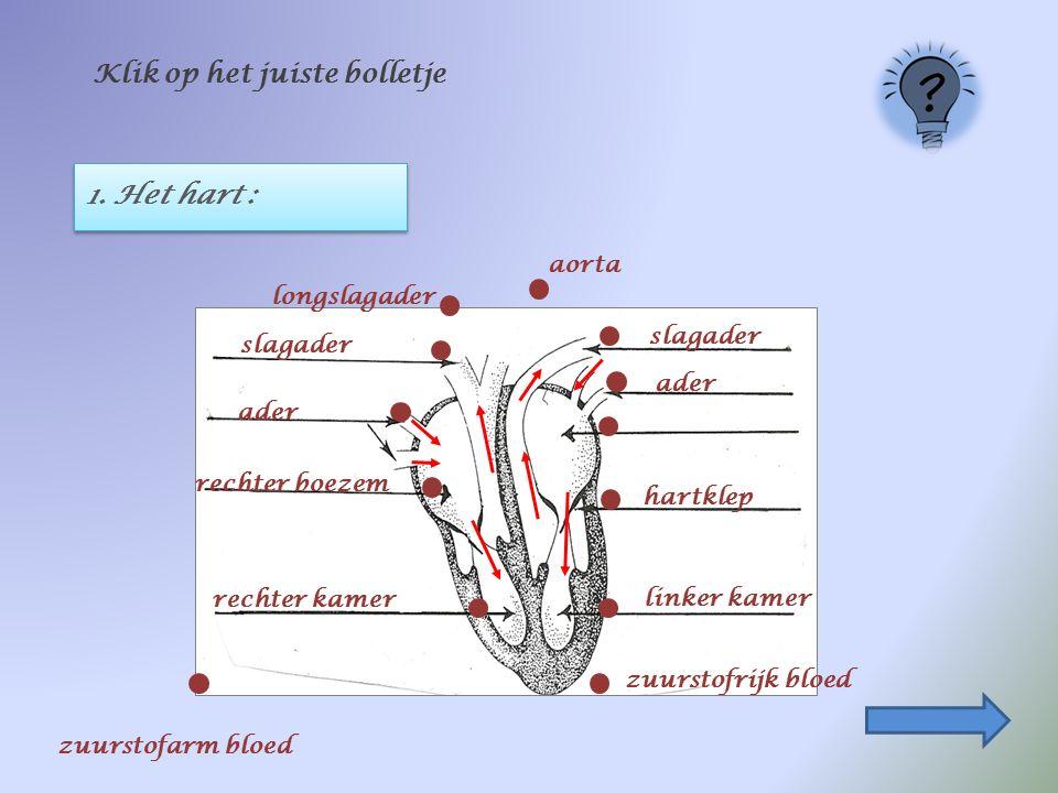 1. Het hart : Klik op het juiste bolletje longslagader ader rechter boezem linker kamer slagader hartklep zuurstofrijk bloed aorta rechter kamer