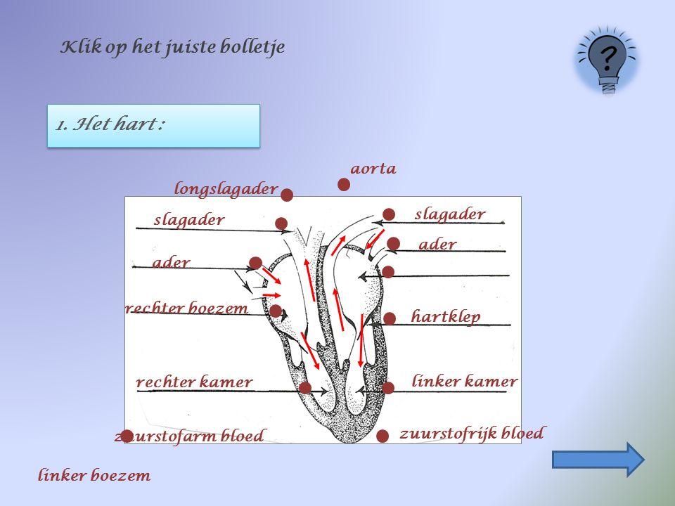 1. Het hart : Klik op het juiste bolletje zuurstofarm bloed longslagader ader rechter boezem linker kamer slagader hartklep zuurstofrijk bloed aorta r