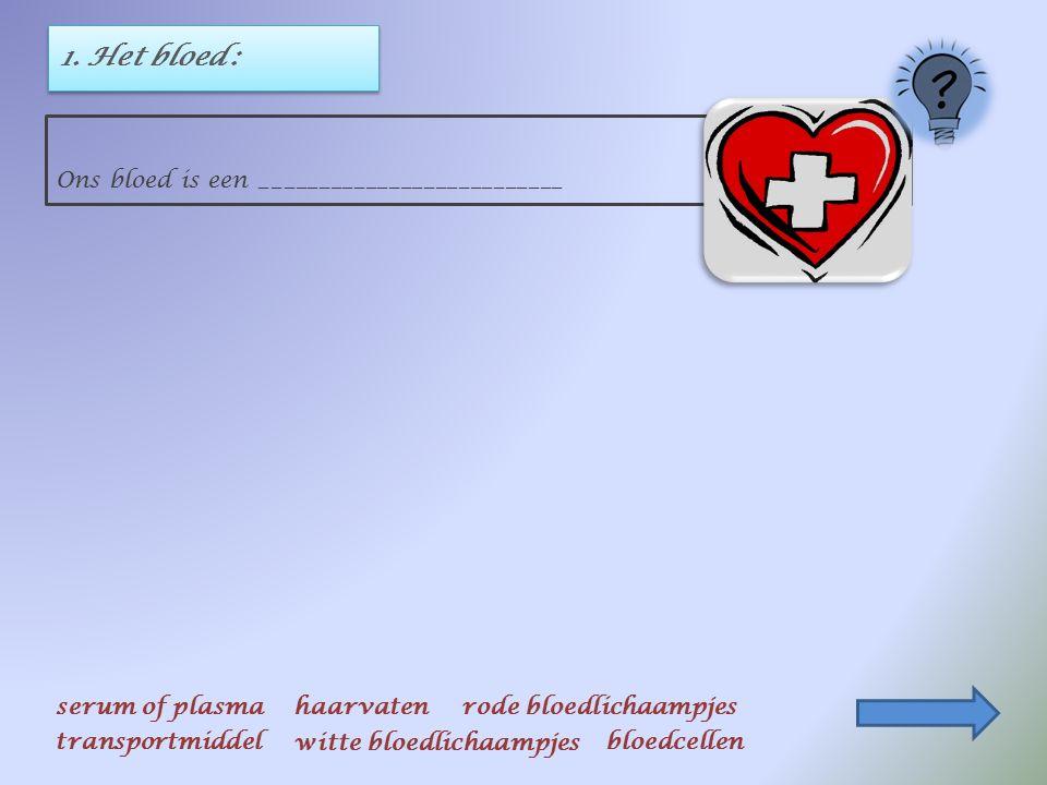 BESLUIT : klik op het juiste antwoord Ons hart is een holle spier, ongeveer zo groot als een vuist. Een tussenschot verdeelt het hart in twee helften.