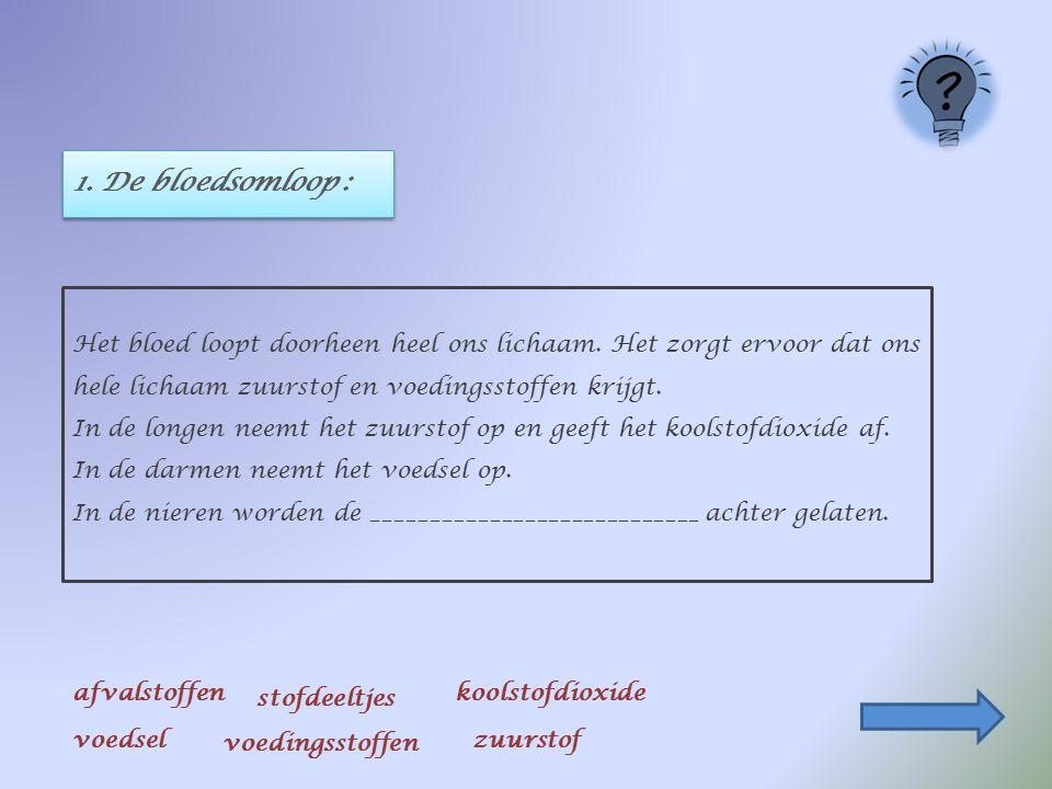 1. De bloedsomloop : Het bloed loopt doorheen heel ons lichaam. Het zorgt ervoor dat ons hele lichaam zuurstof en voedingsstoffen krijgt. In de longen