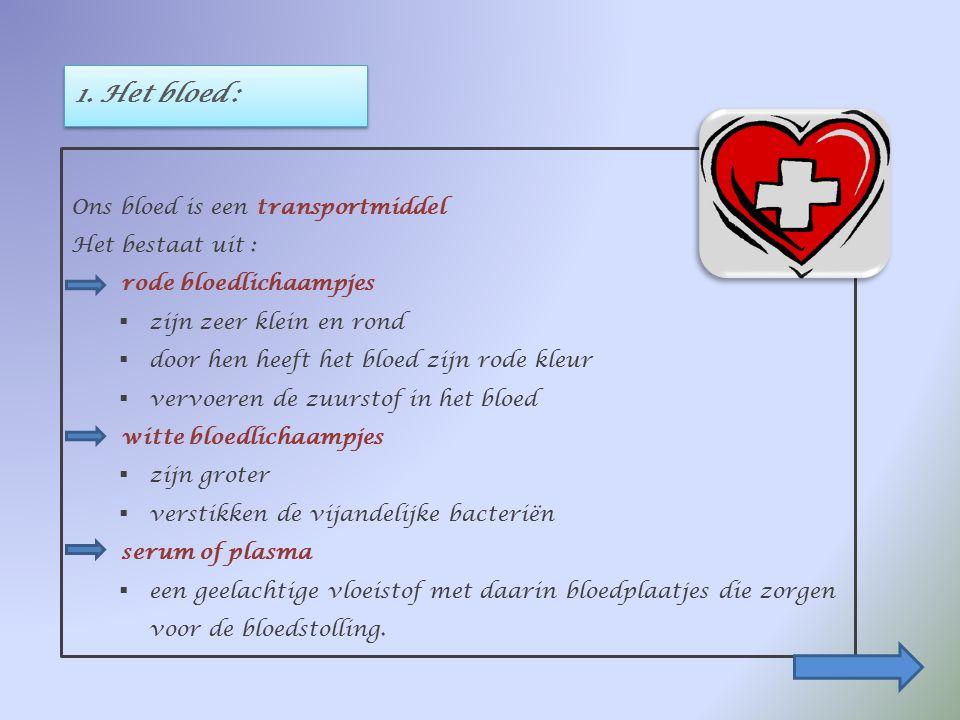 BESLUIT : Ons hart is een holle spier, ongeveer zo groot als een vuist. Een tussenschot verdeelt het hart in twee helften. Iedere helft bestaat uit ee