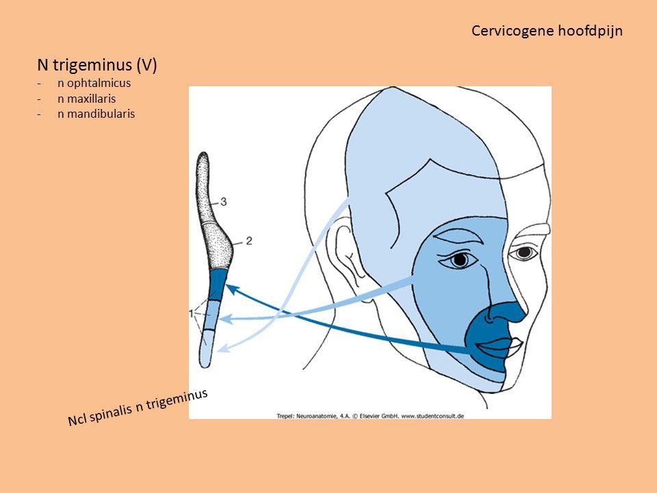 Ncl spinalis n trigeminus N trigeminus (V) -n ophtalmicus -n maxillaris -n mandibularis Cervicogene hoofdpijn