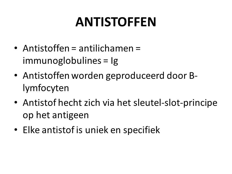 ANTISTOFFEN Antistoffen = antilichamen = immunoglobulines = Ig Antistoffen worden geproduceerd door B- lymfocyten Antistof hecht zich via het sleutel-slot-principe op het antigeen Elke antistof is uniek en specifiek