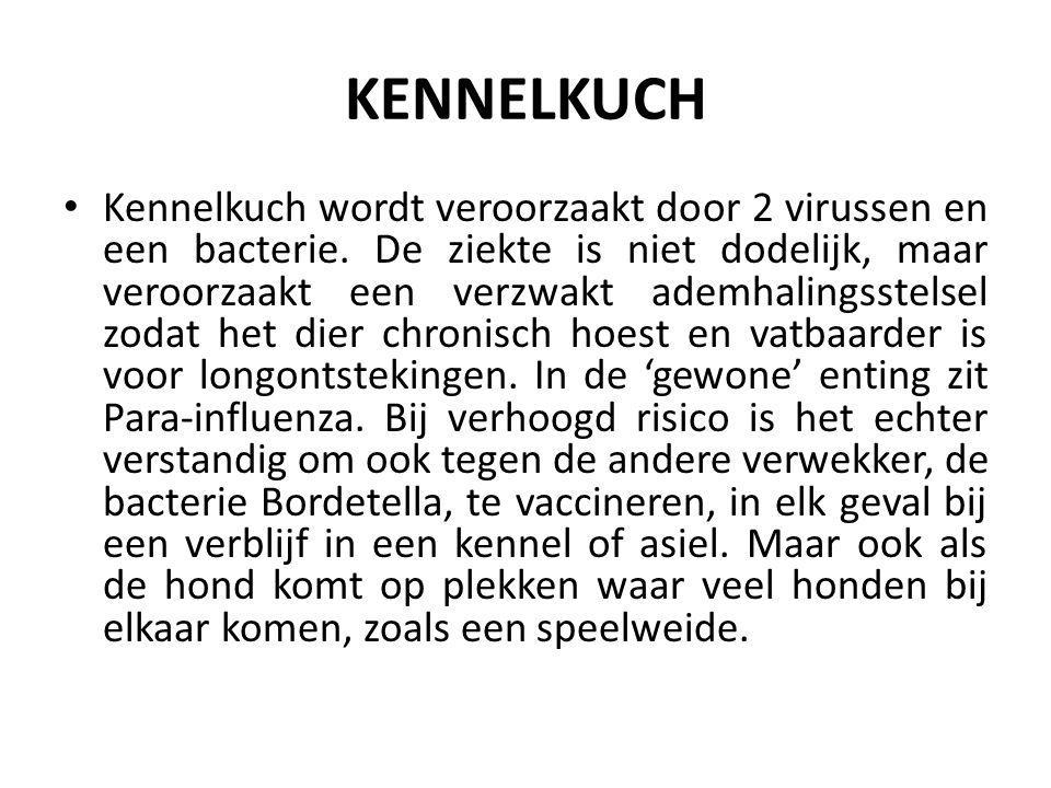 KENNELKUCH Kennelkuch wordt veroorzaakt door 2 virussen en een bacterie.
