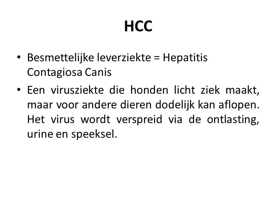 HCC Besmettelijke leverziekte = Hepatitis Contagiosa Canis Een virusziekte die honden licht ziek maakt, maar voor andere dieren dodelijk kan aflopen.