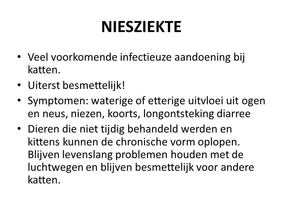 NIESZIEKTE Veel voorkomende infectieuze aandoening bij katten.