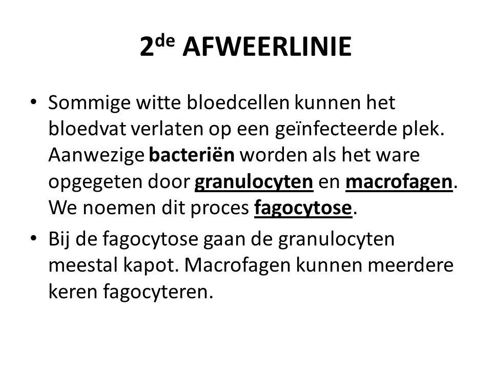 2 de AFWEERLINIE Sommige witte bloedcellen kunnen het bloedvat verlaten op een geïnfecteerde plek.