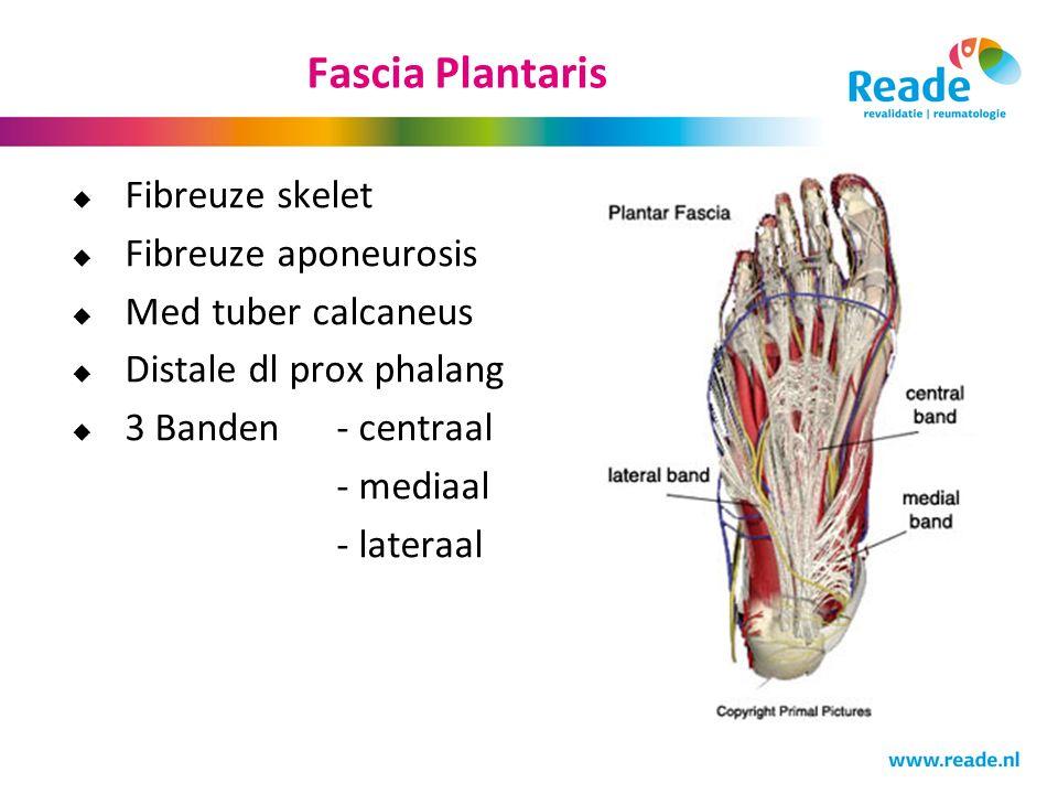 Fascia Plantaris  Fibreuze skelet  Fibreuze aponeurosis  Med tuber calcaneus  Distale dl prox phalang  3 Banden- centraal - mediaal - lateraal